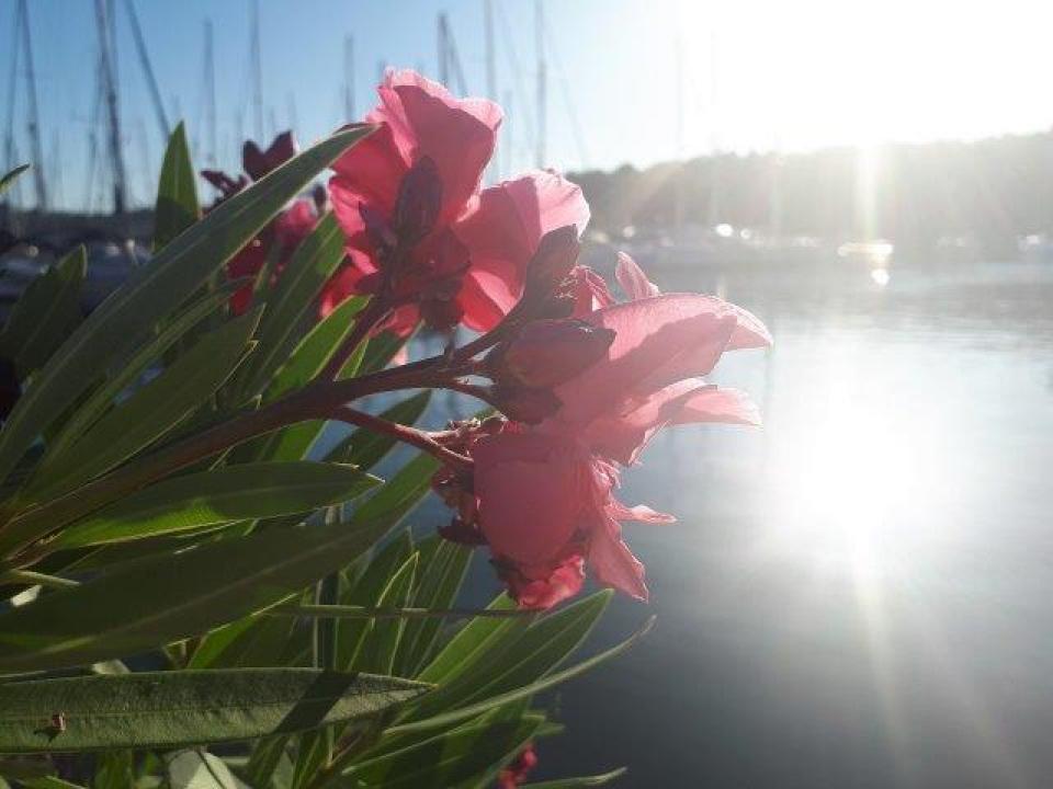 slika cvijet.jpg